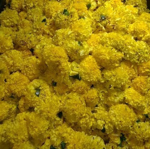Yellow marigold chanduva at rs 10 kilogram marigold flower id yellow marigold chanduva mightylinksfo