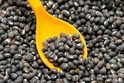 Black Whole Urad Dal, Pan India, Packaging Size: 50 Kg