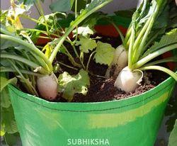 Radish in Grow Bags