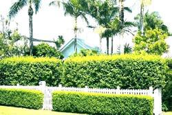 Front Yard Grass Vertical Landscape