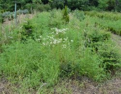 Weeds Control Treatment Service