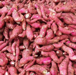 Red A Grade Sweet Potato, Packaging Size: 60