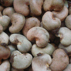 Organic Raw Cashew Nuts