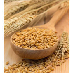 Indian Deepika Agro Products Pearl Barley Jau