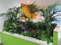 Interior Landscaping Service