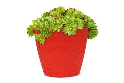 Flower Pot Poppy Pot-07 Fresh