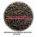 Shatavari Seed