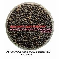 Neelkanth Agro Black Satavar Seeds Selected, Packaging Size: 1 Kg