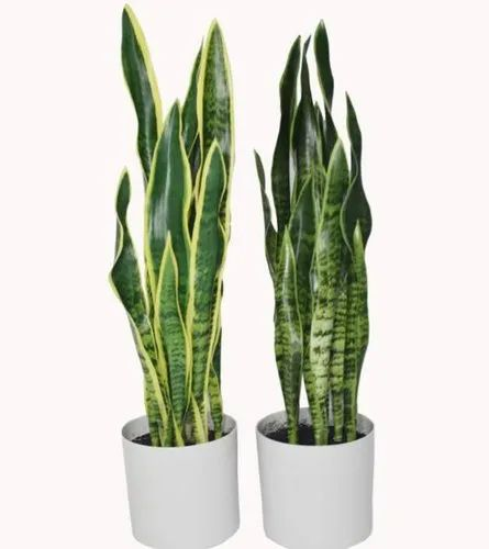 Artificial Sansevieria Plant Snake Plant With Pot Decorative Artificial Plant Fake Plant आर ट फ श यल प ध क त र म प ध आर ट फ श यल प ल ट Panchanan Interiors Private Limited Mumbai Id 14491319833
