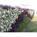 Vertical Garden Services