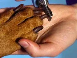 Dog Nail Cutting Service