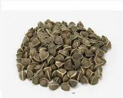 Moringa Seed Exporters