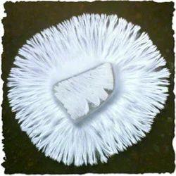 White Button Mushroom Spawn