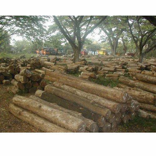 Wood Log Merbau Wood Log Wholesale Trader From Tiruvalla