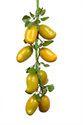 Plastic Yellow Artificial Mango Fruit