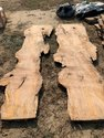 Live Edge Slabs, Thickness: 2-3 Inch
