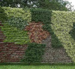 Vertical Gardening Service