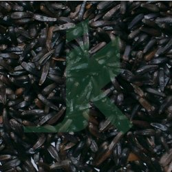 Black Organic Guizojia Abyssynica Niger Seed