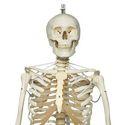 Skeleton Frank Hanging Stand