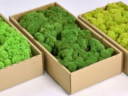 Preserved Moss - 500gm Packing