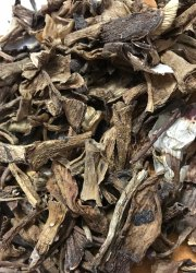 Aloe Vera dried leaf