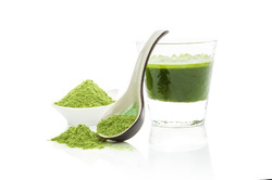 Moringa Powder Supplier