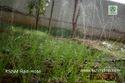 Rain Sprinkler