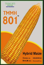 Maize Hybrid TMMH 801