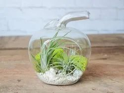 Apple Glass Terrarium