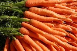 Carrot New Karuna Seeds
