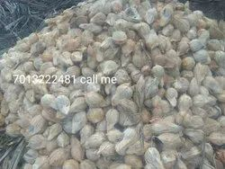 A Grade Semi Husked Coconut Large Size, Packaging Size: 50 Kg, Coconut Size: Medium