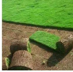 Selection 1 Grass for Garden
