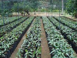 Nursery Outdoor Plant