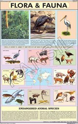 Flora & Fauna For Man & Environment Chart