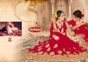 Bridal Wear Georgette Saree - Love Bird
