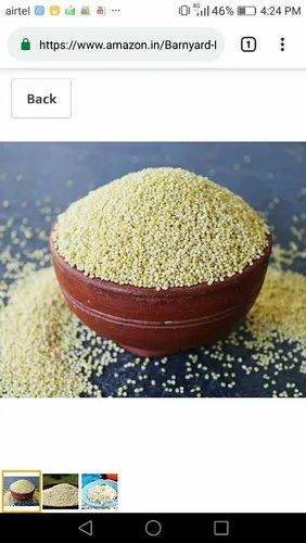 Natural Browntop Millet., for Food