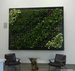 Indoor Air Purifying Green Wall