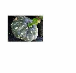 Yes Green Pumpkin