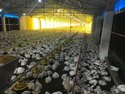 MS Poultry Farm