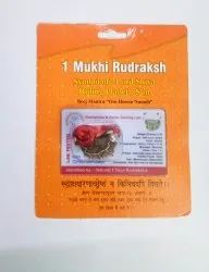 Kesar Zems Natural One Face Ek Mukhi Nepali Rudraksha with Certificate, Standard Size, Brown