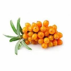 Sea Buckthorn Extracts