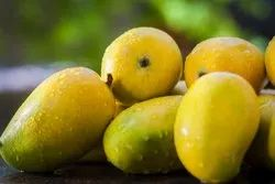 Brand:Pac, Yellow Fresh Organic Kesar Mangoes, Carton, Packaging Size: 5 Kg