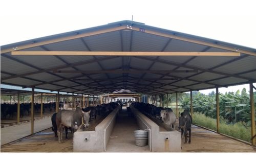 Steel Dairy Farm Sheds M S Repromachines Id 11391267230