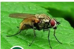 House Flies Pest Control Services