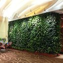 Decorative Green Wall Installation Service