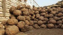 Elephant Yam (Bulk Shipment Exports Orders)