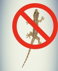 Lizard Control Service