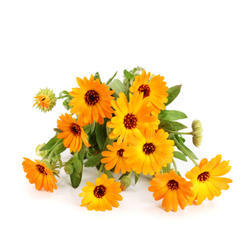 Marigold Absolute Oil nbsp