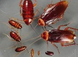 Insect Pest Control Service