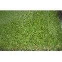 PP Artificial Lawn Grass